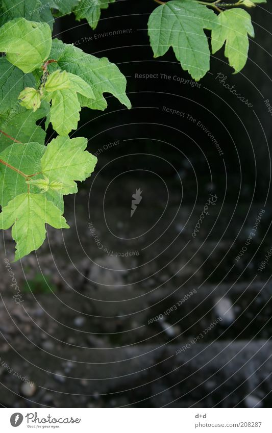 %°° Natur grün Pflanze Blatt dunkel Tod Angst Beton Trauer Treppe Sträucher bedrohlich Ast Vergänglichkeit verstecken