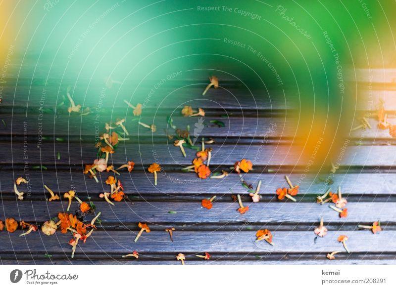Verblüht Umwelt Natur Pflanze Sonnenlicht Sommer Klima Schönes Wetter Wärme Dürre Blume Blüte Holzfußboden Balkon braun grün verblüht Vergänglichkeit Ende viele