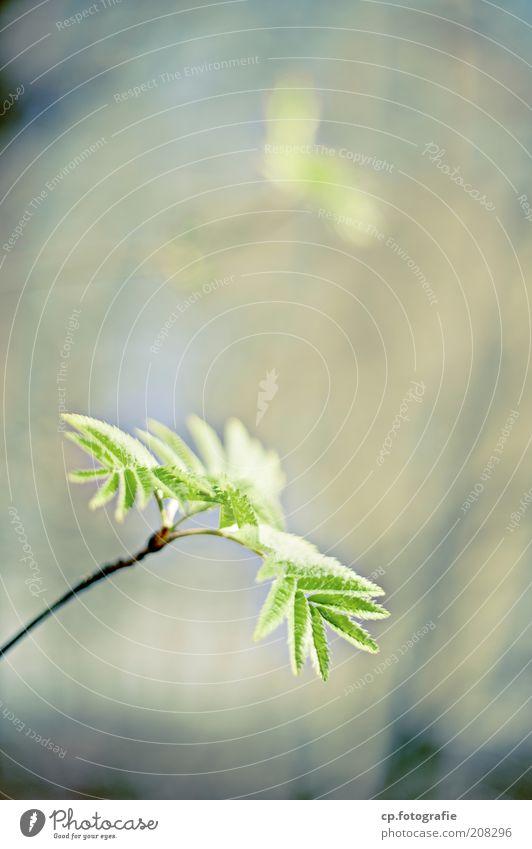 Junge Triebe 2 Natur Baum Sonne Pflanze Blatt Wald Frühling Park Sträucher natürlich nachhaltig Grünpflanze Gärtner Wildpflanze Gärtnerei