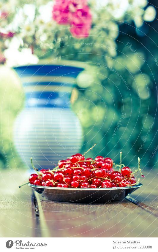 dem Johannis seine Beeren schön Blume Ernährung Frucht frisch Dekoration & Verzierung einzigartig Blumenstrauß Teller Festessen Picknick Bioprodukte Vase Brunch