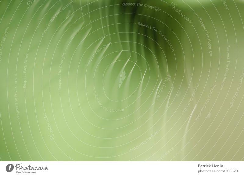 niemand da Natur weiß grün Haus Tier Linie hell Netzwerk zart fest tierisch bauen Spinne beweglich zerbrechlich