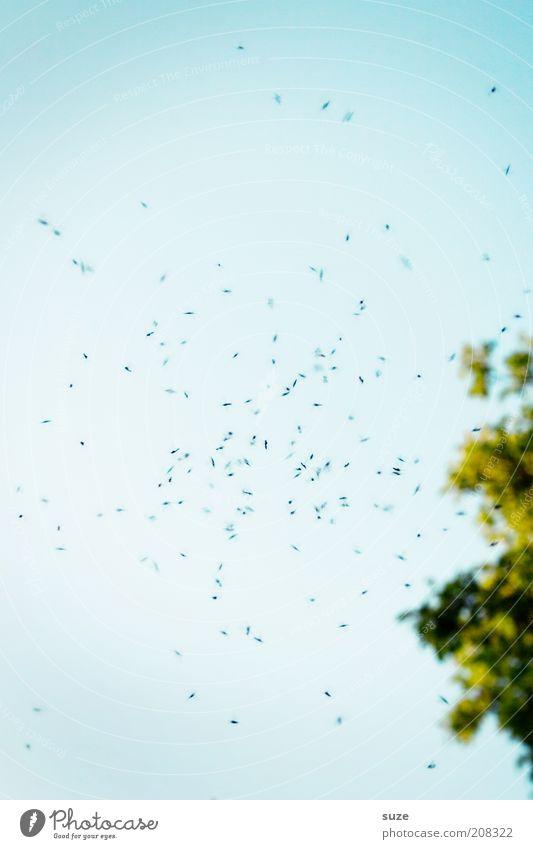 Mücken Sommer Umwelt Natur Himmel Klima Schönes Wetter Pflanze Baum Tier Stechmücke Mückenplage Schwarm fliegen außergewöhnlich bedrohlich Farbfoto mehrfarbig