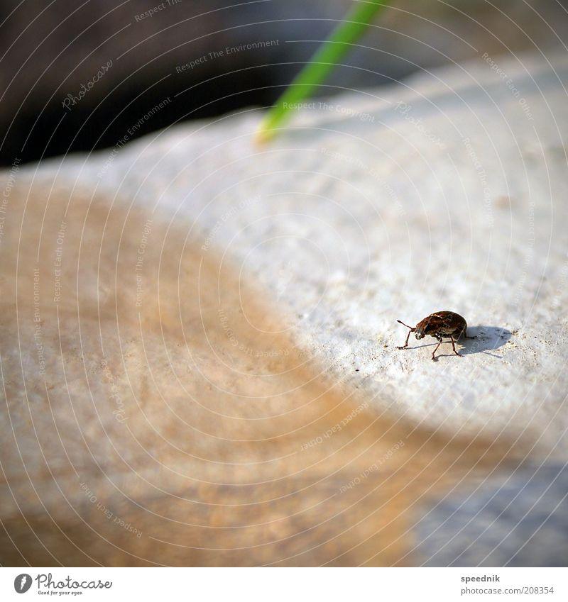 Das kleine Krabbeln Tier Wildtier Käfer 1 krabbeln braun weiß Umwelt Insekt Farbfoto Außenaufnahme Nahaufnahme Textfreiraum links Textfreiraum oben