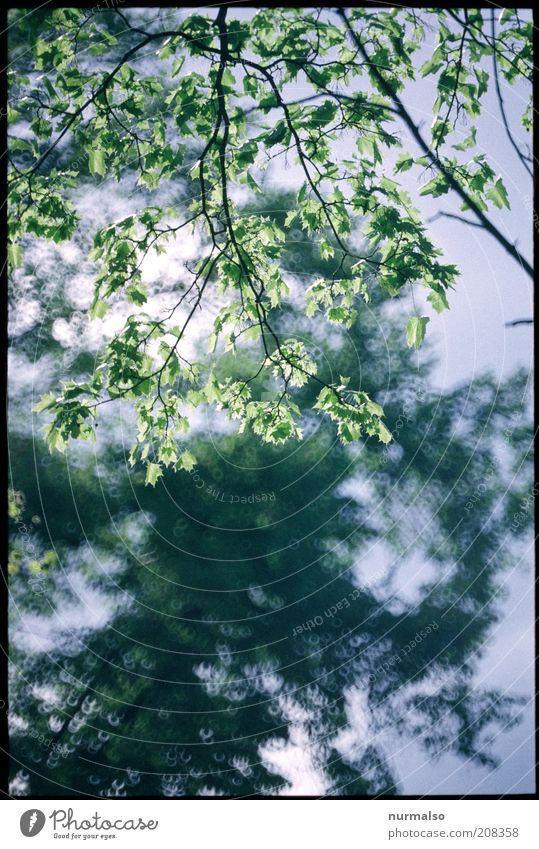frisches Grün Umwelt Natur Pflanze Schönes Wetter Baum Blatt Grünpflanze glänzend leuchten natürlich positiv saftig schön Stimmung Klima Lebensfreude ruhig