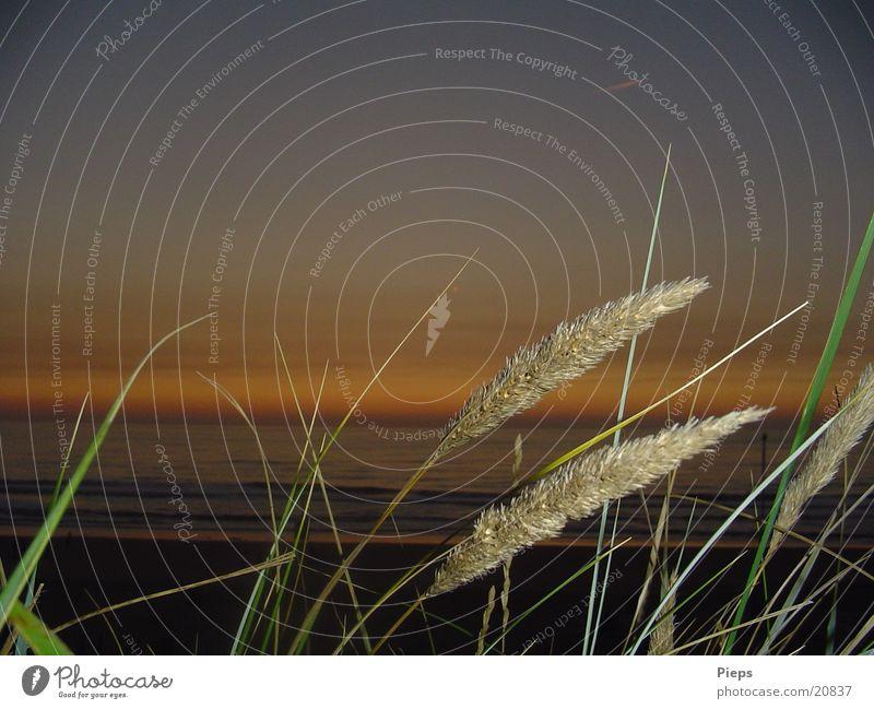 Gras in Holland Natur Wasser Himmel Meer Sommer Strand Ferien & Urlaub & Reisen Erholung träumen Wellen Küste Horizont Tourismus Nordsee Niederlande