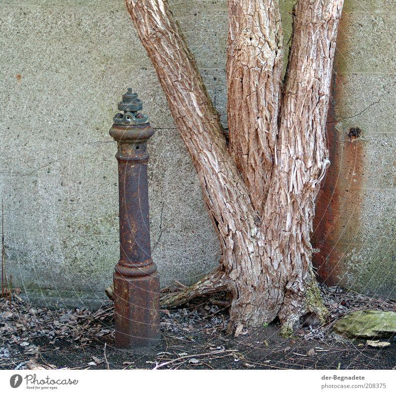 Zum Alten Eisen Hydrant Baum Ruine Bauwerk Mauer Wand Stein Beton Holz Metall Stahl Einsamkeit Natur Nostalgie Stimmung Umwelt Umweltverschmutzung Verfall