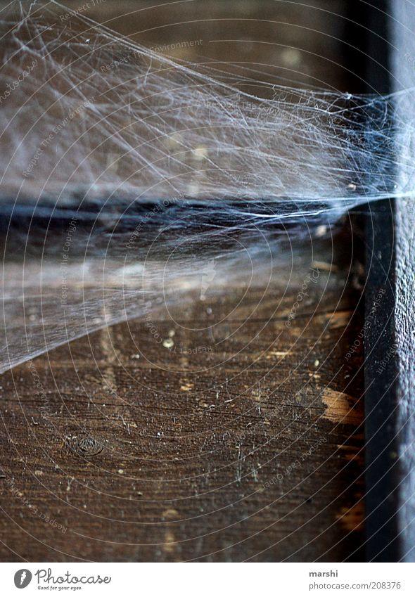 Spidermans Zuhause Natur alt Spinnennetz Ekel Holz Holzwand dreckig Farbfoto Außenaufnahme Holzbrett Ecke Fuge verfallen schäbig Vergangenheit braun