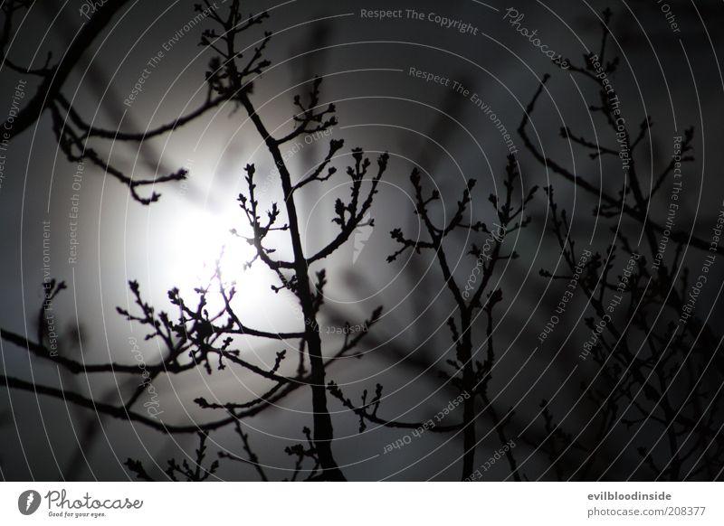 Wintermoon Natur Pflanze dunkel schwarz Sträucher Ast Zweig kahl Nachthimmel Mond Schwarzweißfoto Mondschein Vollmond Himmel