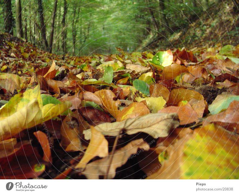 Es raschelt wieder... Farbfoto Außenaufnahme Tag Natur Landschaft Erde Herbst Baum Blatt Wald alt trocken mehrfarbig Einsamkeit Ferien & Urlaub & Reisen
