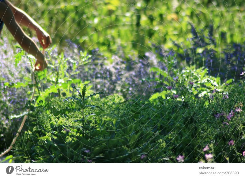 im Garten Mensch Natur Hand Blume grün Pflanze Sommer Blatt Arbeit & Erwerbstätigkeit Blüte Wärme Arme Umwelt Sträucher authentisch