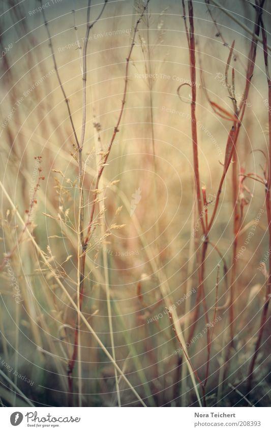 es sind die kleinen Dinge ... Natur schön Pflanze Sommer Herbst Wiese Blüte Gras träumen Wege & Pfade Park Landschaft Feld Umwelt Perspektive ästhetisch