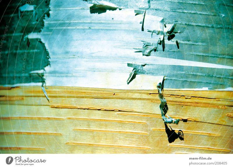 sonnenbrand Birke Baumrinde Hintergrundbild Natur häuten abziehen verwundbar abblättern Niveau Oberfläche Oberflächenstruktur Außenaufnahme Farbfoto