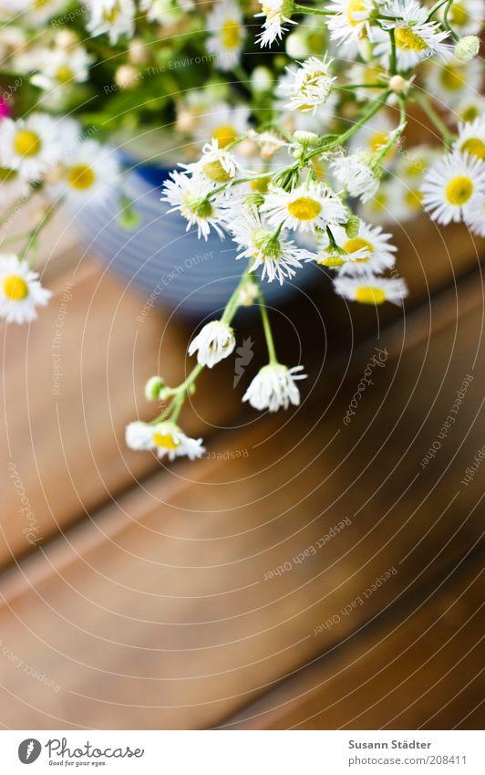 der Sommer muss bleiben schön Blume Garten Sträucher Dekoration & Verzierung Streifen einzigartig Kräuter & Gewürze Blumenstrauß Vase Holzfußboden Aussaat Landwirtschaft Kamille Schatten Pflanze