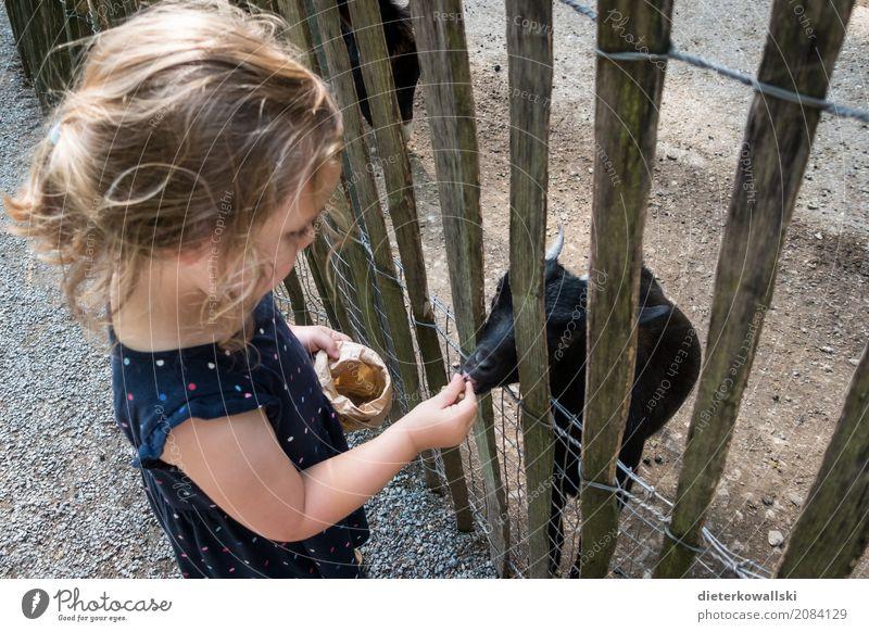 Tiere füttern Mensch Kind Natur schön Mädchen Umwelt Wiese Park Kindheit lernen Neugier Landwirtschaft Kleinkind Kindergarten Zoo