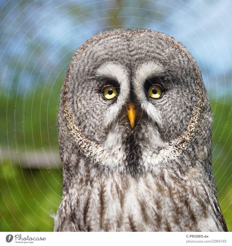 Was bist du denn für'n komischer Kauz? Tier Wald Zufriedenheit Wildtier Feder Schönes Wetter Flügel beobachten Wachsamkeit Tiergesicht Zoo Schnabel Eulenvögel