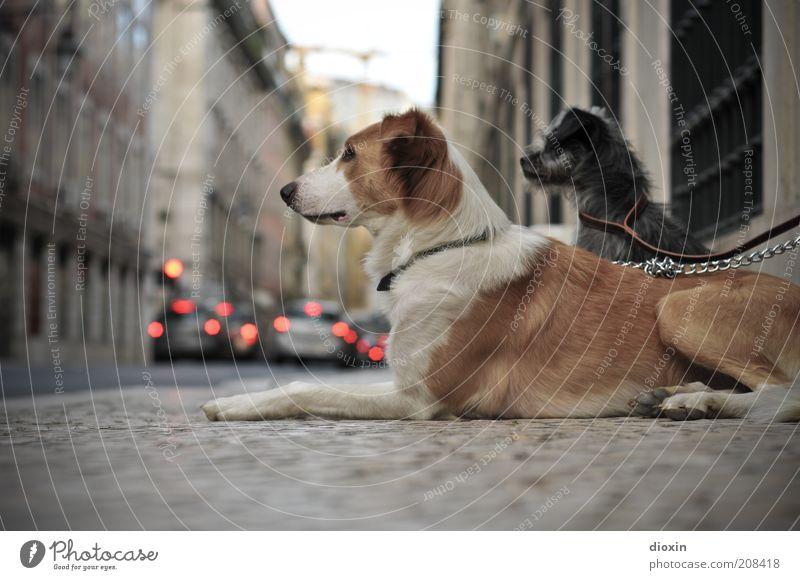 waiting, waiting, waiting, waiting weiß Stadt Tier Straße Wand grau Hund Mauer PKW braun klein Zusammensein warten Tierpaar sitzen groß
