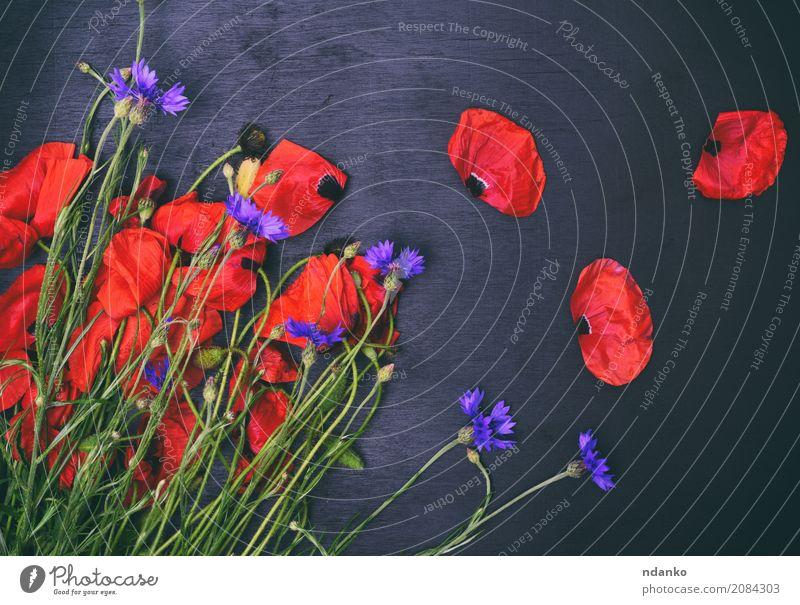 Blumenstrauß aus Feld Mohn und Kornblumen schön Sommer Feste & Feiern Natur Pflanze Blatt Blüte Blühend natürlich wild blau grün rot schwarz Farbe Überstrahlung