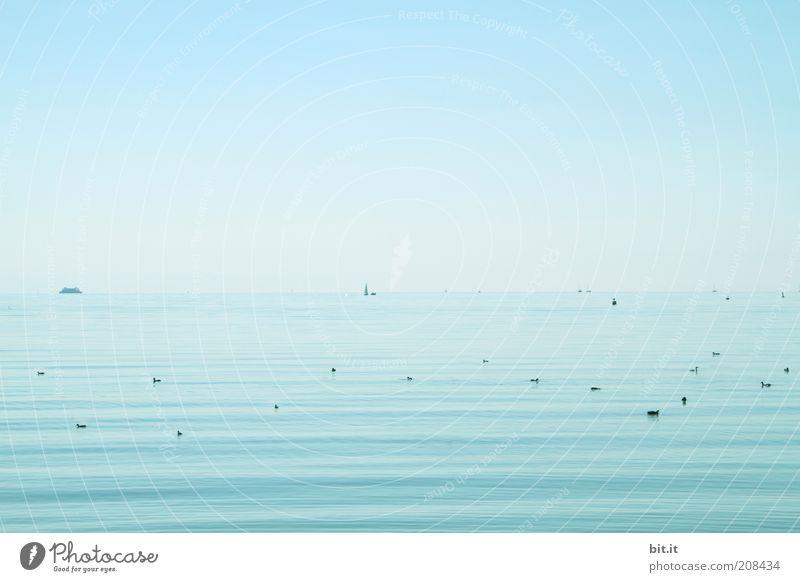auf dem schwäb'schen Meer Himmel Natur Wasser blau Sommer ruhig Ferne Erholung Umwelt Freiheit See Zufriedenheit Wellen Schwimmen & Baden Tiergruppe Schönes Wetter