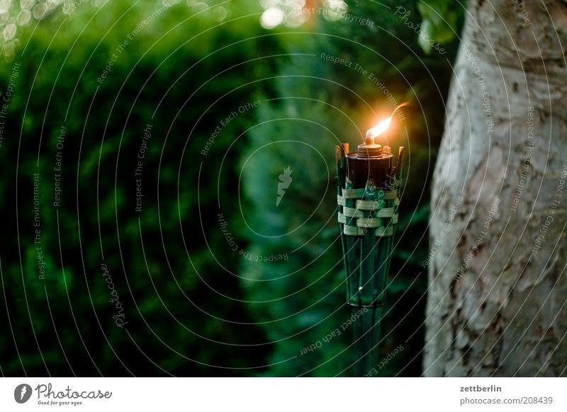 Kerze im Garten Natur Baum Fackel Baumstamm Apfelbaum Konifere Flamme Licht Lichterscheinung Abenddämmerung dunkel Flackern Wind Windlicht Lampe Öllampe