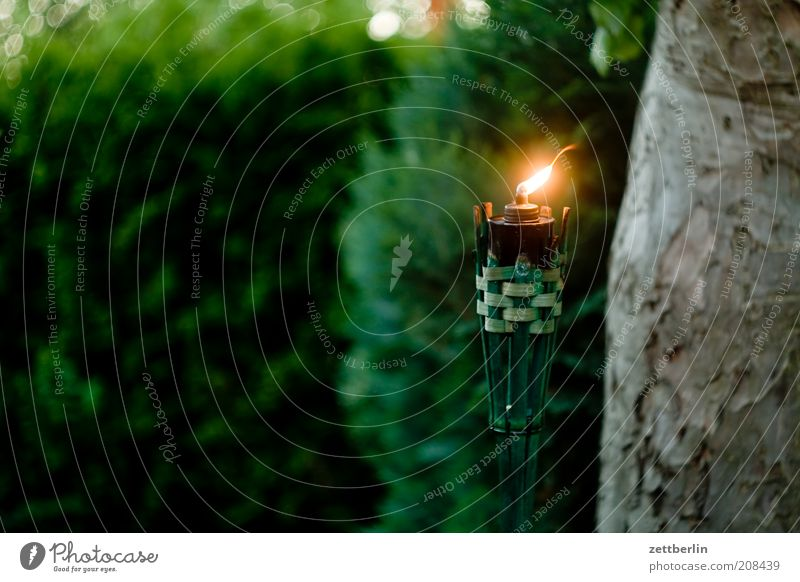 Kerze im Garten Natur Baum Ferien & Urlaub & Reisen Lampe dunkel Party Garten Park Wind Kerze Grillen Baumstamm Flamme Glaube Abenddämmerung Hecke