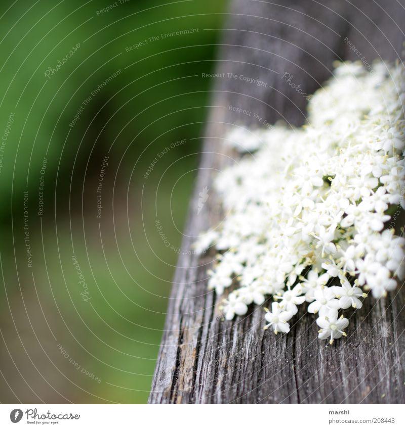 von allem etwas Natur weiß Blume grün Pflanze Sommer Blüte Frühling Garten Park Sträucher Holz Holunderbusch Holzstruktur