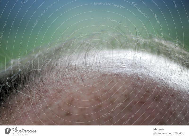 Es sprießt doch noch Mensch Mann schön Senior oben Haare & Frisuren Kopf Erwachsene maskulin Hoffnung Wachstum entdecken Erwartung stachelig 45-60 Jahre