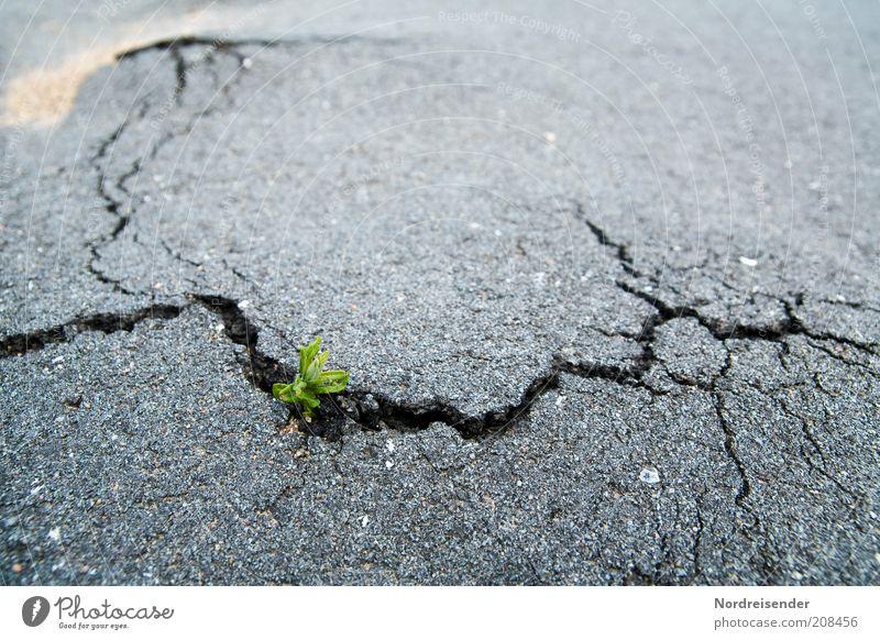 Kleinigkeit Umwelt Natur Pflanze Urelemente Erde Klima Wildpflanze Straße Wege & Pfade alt Wachstum kaputt stark Optimismus Kraft Hoffnung Leben Überleben