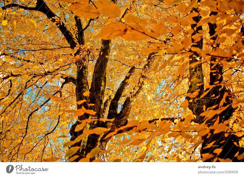 Herbst Natur schön Baum Blatt Wald gelb Wärme Holz Stimmung orange Wind Schönes Wetter Ast Baumstamm Herbstlaub