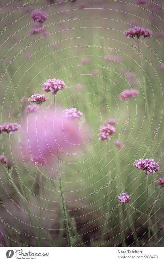 Die Farbe Lila II Natur schön Baum grün Pflanze Sommer Leben Wiese Gefühle Gras Frühling träumen Park Landschaft Stimmung Umwelt