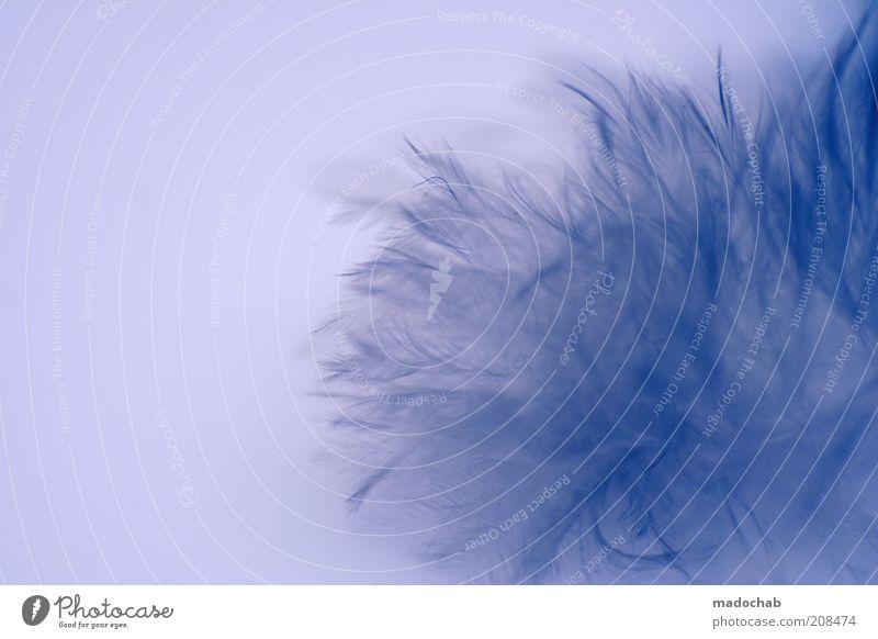 The flausch™ Lifestyle elegant Stil exotisch schön harmonisch ruhig Kitsch positiv weich ästhetisch Farbfoto Gedeckte Farben Nahaufnahme Detailaufnahme