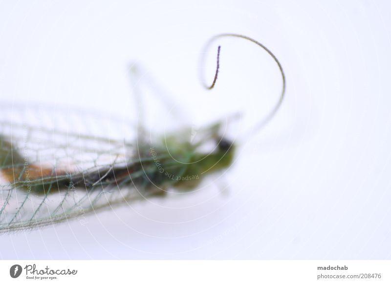 The rausch™ Tier Einsamkeit Tod liegen ästhetisch Flügel Insekt skurril Fühler Detailaufnahme Totes Tier
