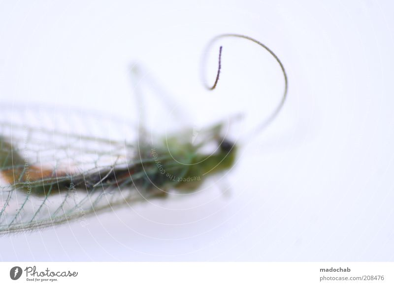 The rausch™ Tier Totes Tier Insekt Tod Einsamkeit ästhetisch skurril Flügel Fühler liegen Farbfoto mehrfarbig Nahaufnahme Detailaufnahme Makroaufnahme Muster