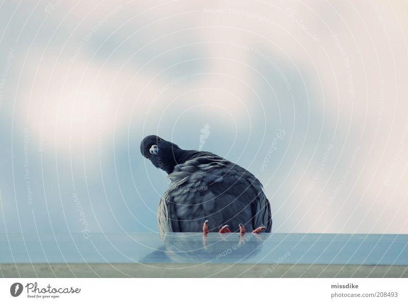 skepsis Himmel Natur blau Sommer Tier Wolken Umwelt grau Kopf Luft Vogel Wildtier sitzen warten Feder Dach
