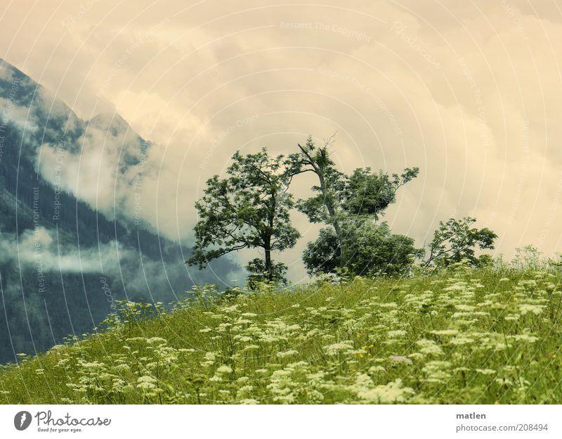 Bewölkung Himmel weiß Baum grün Pflanze Sommer Wolken Wiese Gras Berge u. Gebirge Freiheit Landschaft fantastisch Unendlichkeit Gipfel Duft