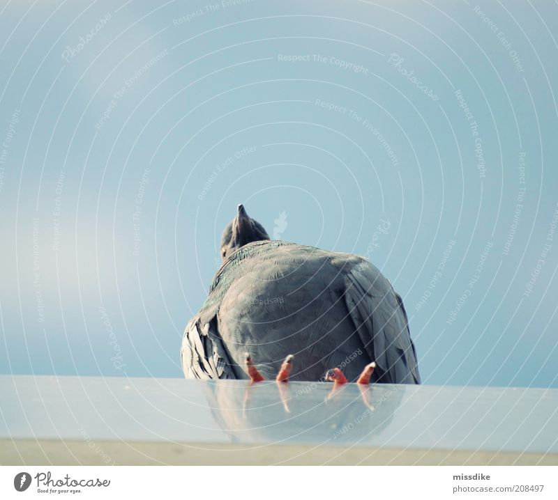 fernweh Himmel Natur blau Sommer Tier Einsamkeit ruhig Umwelt grau Luft Vogel Wildtier Flügel einzeln Fernweh Taube