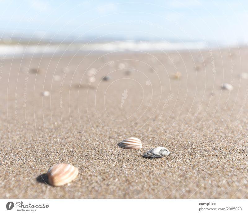 Muscheln und so Himmel Natur Ferien & Urlaub & Reisen Sommer Sonne Meer Ferne Strand Küste Glück Tourismus Sand Wellen Insel Panorama (Bildformat) Sommerurlaub