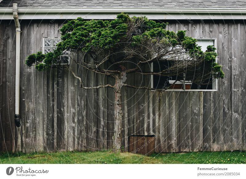Roadtrip West Coast USA (35) Baum Haus Fenster Wiese Häusliches Leben Idylle Rasen Dorf Hütte Kleinstadt Heimat Holzhütte Dachrinne Domizil Westküste