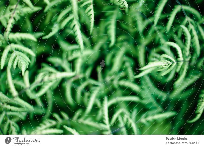 Dazed and confused Umwelt Natur Pflanze Sommer Farn genießen ästhetisch schön nah rund grün tief durcheinander träumen traumhaft Traumwelt schwarz Farbfoto