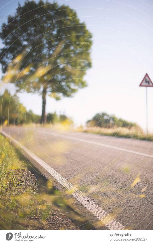 Country Roads Ausflug Ferne Freiheit Natur Pflanze Wolkenloser Himmel Sonne Sommer Baum Gras Sträucher Straße Straßenbelag Straßenbegrenzung Straßennamenschild