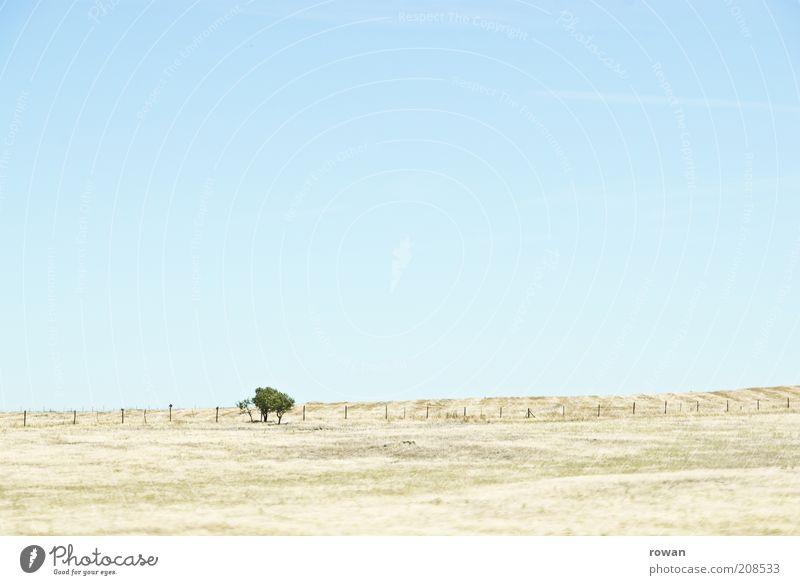 bäumchen Natur Baum Wärme Sand Landschaft hell Feld Umwelt Wüste heiß Unendlichkeit Hügel trocken Schönes Wetter Steppe Dürre