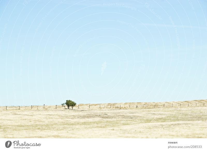 bäumchen Umwelt Natur Landschaft Sand Wolkenloser Himmel Schönes Wetter Wärme Dürre Baum Feld Hügel Wüste Unendlichkeit heiß hell trocken Steppe Farbfoto
