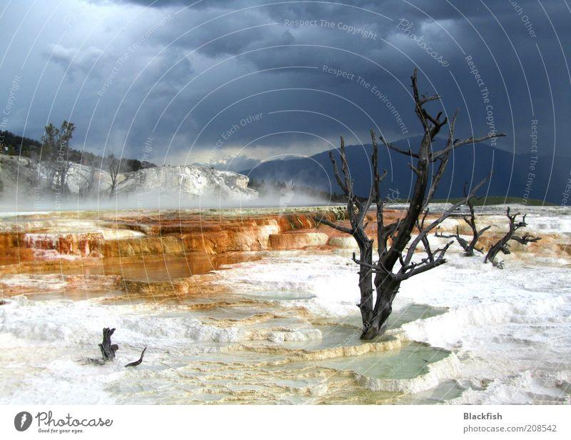 Mein Freund der Baum ist tot Natur Landschaft Urelemente Wasser Himmel Wolken Gewitterwolken Wetter schlechtes Wetter Schnee Sträucher Berge u. Gebirge