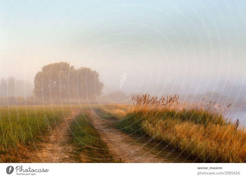 Himmel Natur Ferien & Urlaub & Reisen Pflanze blau Sommer grün Wasser Baum Landschaft Wald Wiese Wege & Pfade Gras Tourismus See