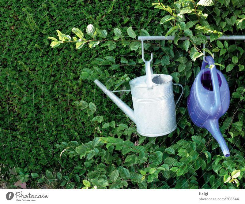einfach mal abhängen... Natur blau grün Pflanze Sommer Blatt ruhig grau Garten Metall Park Ordnung authentisch Wachstum paarweise Sträucher