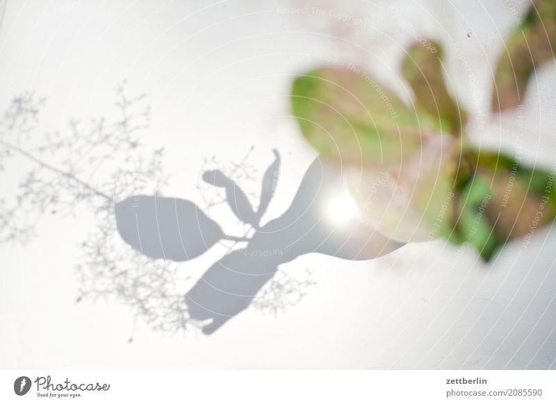 Unscharfe Blume mit scharfem Schatten Blühend Blüte Dekoration & Verzierung Licht hell Sonne Romantik Sommer Textfreiraum Tisch Tischwäsche Vase