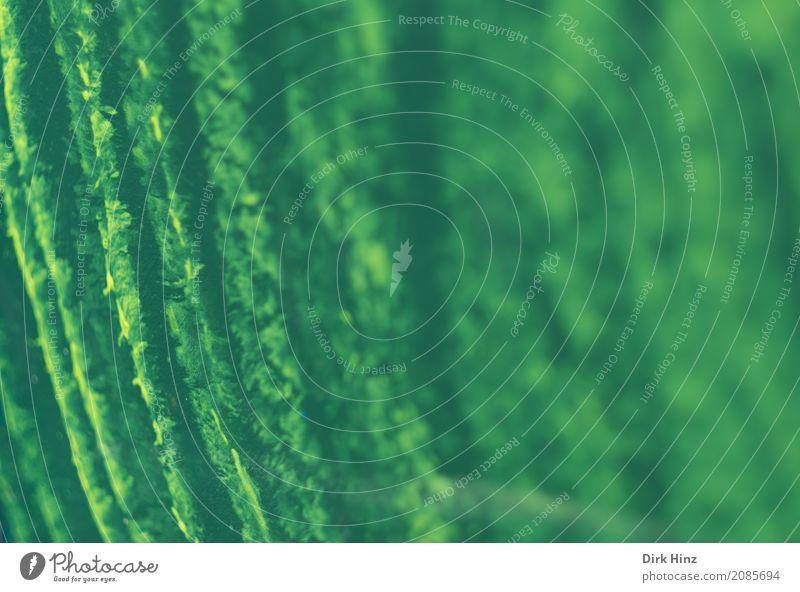 Gelb auf Grün Farbe grün gelb Hintergrundbild Kunst Linie Kultur malen Streifen Gemälde Kunstwerk Ausstellung Farben und Lacke Aquarell Pinselstrich grün-gelb