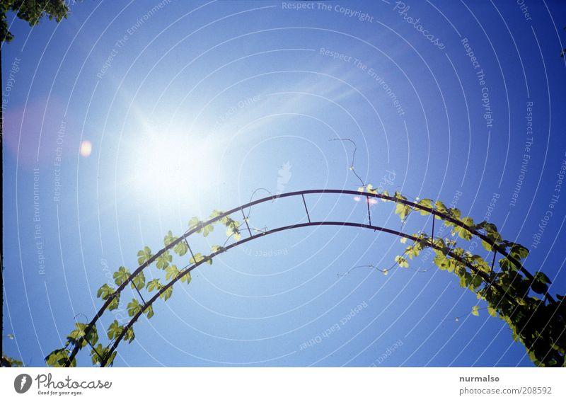Gartenbogen Stil Umwelt Natur Pflanze Sommer Schönes Wetter Ranke Kletterrose Zeichen hängen leuchten Wachstum Duft schön Freude nachhaltig Bogen Himmel