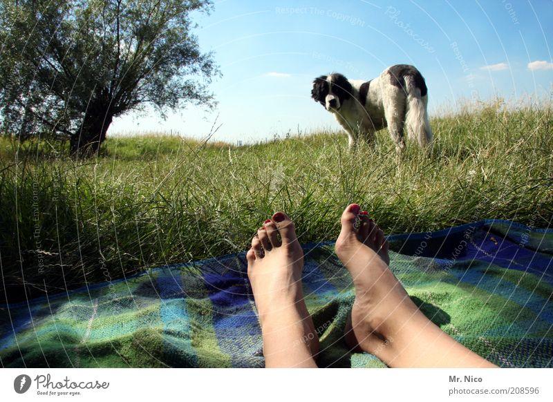 Ich bin dann mal weg ! Himmel Natur grün Baum Sommer ruhig Wiese Leben Hund Landschaft Freiheit Gras Beine Fuß Zufriedenheit Haut