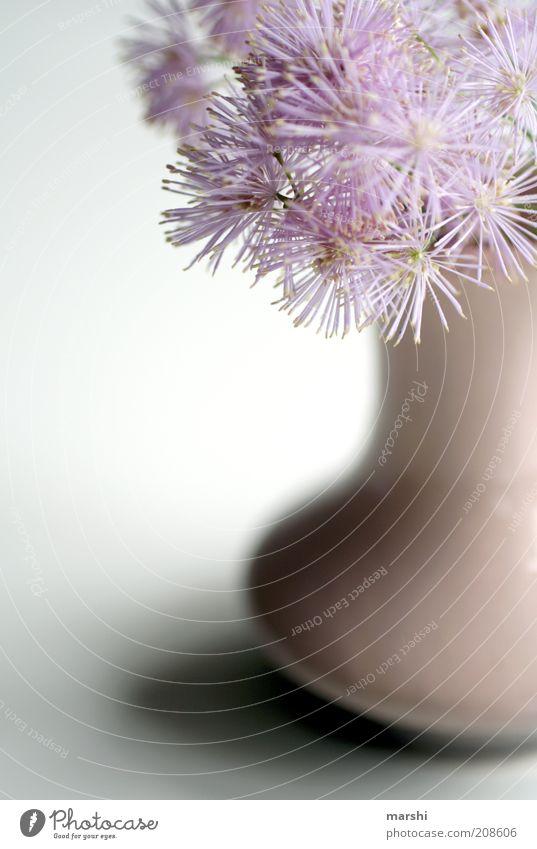 flauschige Blümchen schön Blume Pflanze Blüte rosa weich Dekoration & Verzierung Blumenstrauß Vase Anschnitt Unschärfe