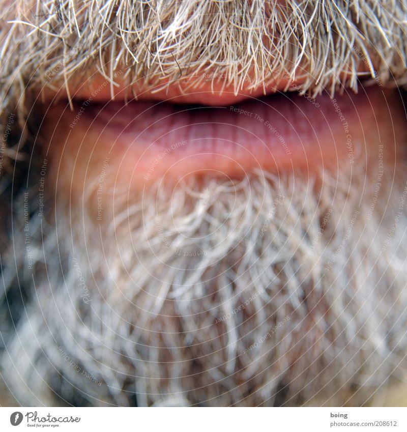 Nutella im Bart macht das Haar zart maskulin Mund Lippen grauhaarig Vollbart atmen sprechen Wachstum stachelig Nahaufnahme Männermund Barthaare gepflegt